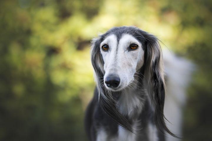 Qu'est-ce que la teigne et comment affecte-t-elle les chiens ?
