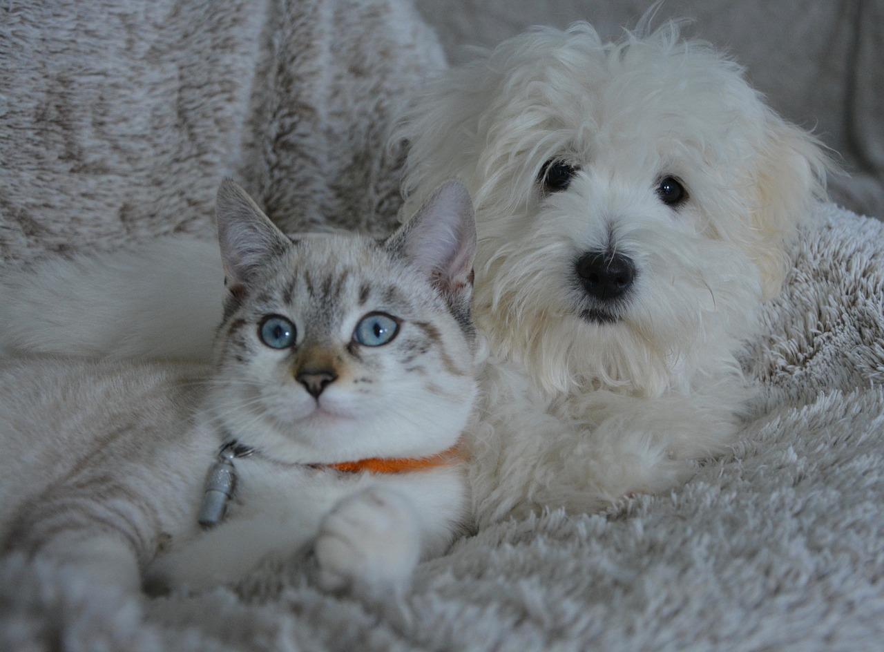 Vaut-il mieux prendre un chien ou un chat chez soi ?